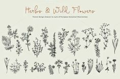 Bullet journal drawing ideas, herb and wildflower drawings.
