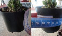 customizando-vasos-plantas-decoração-vasos
