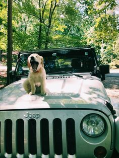 Jeep in Cars & Trucks Baby Animals Pictures, Cute Animal Photos, Animals And Pets, Cute Little Animals, Cute Funny Animals, Cute Dogs And Puppies, I Love Dogs, Doggies, Cute Cars