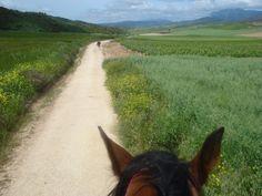 Camino de Santiago - La Rioja - Spain