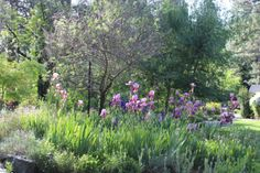 May at The Roth Estate, Blossoms are in Bloom and The Estate is in Full Color!