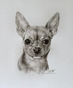 Chihuahua Drawing, Chihuahua Puppies, Rat Terrier, Animals And Pets, Cute Animals, Pet Rocks, Best Dog Breeds, Dog Paintings, Dog Art