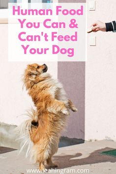 Are you looking for a list of toxic food for dogs? This blog post on human food that is dangerous to dogs can help. It even includes checklist of what you can and cannot feed your pet. Also focuses on the holiday season. Toxic Foods For Dogs, Dangerous Foods For Dogs, Human Food For Dogs, Dog Rooms, Dog Hacks, Dog Owners, Best Dogs, Dog Food Recipes, Dog Breeds