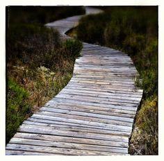 Walkway inside the west coast national park Walkway, West Coast, South Africa, National Parks, Landscape, Outdoor Decor, Sidewalk, Scenery, Side Walkway