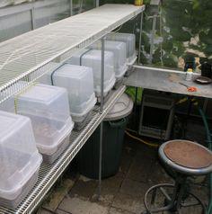 Propagation Chamber - Plant Propagation Forum - GardenWeb