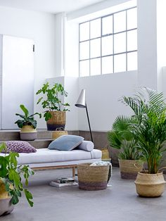 Bring the tropics inside and use beautiful baskets as flower pots - Bloomingville design
