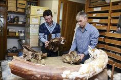 Hello to the Sibirosaurus? New dinosaur discovered by university scientists Plate Tectonics, University, Scientists, Reign, Reptiles, Skeleton, Russia, Paleo, Art
