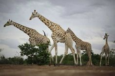 Animals Of Western Africa - I want to go there as a volunteer one day :)