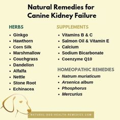 Dogs with canine kidney failure can benefit from natural remedies such as dietary supplements, herbs and homeopathic remedies. This page looks at some useful natural remedies to help manage dog kidney disease and kidney failure. Pet Insurance Reviews, Pet Health Insurance, Best Pet Insurance, Life Insurance, Puppy Care, Dog Care, Homeopathic Remedies, Natural Remedies