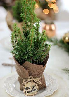 { mini christmas trees for place settings }