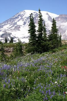 Mt. Rainier Summer hiking,  Finding the Extraordinary in the Ordinary