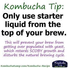 Loads of Kombucha recipes and a few good tips. Kombucha Scoby, Kombucha Recipe, Making Kombucha, Kombucha Drink, Probiotic Drinks, Fermentation Recipes, Homebrew Recipes, Tips & Tricks, Fermented Foods