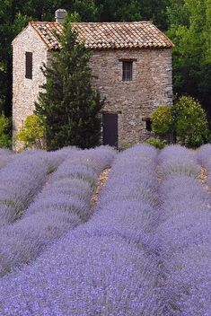 Lavender fields in Provence.this is a softer hue of the fragrant herbal… 農家 French Country House, French Farmhouse, Country Style, Farmhouse Ideas, Vintage Farmhouse, La Provence France, Provance France, Provence Style, Aix En Provence