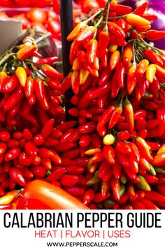 Calabrian peppers are a medium-hot chili (25,000 to 40,000 Scoville heat units) that are named after their region of origin, Calabria in Southern Italy. Its flavor is unique and a big part of this pepper's charm: smoky, fruity, and a touch salty. It's a popular chili for Italian cuisine, but its usage goes well beyond use in pastas and sauces. #calabrianpepper #pepperguide #peppers #italianchili #chili #italian Serrano Pepper, Ghost Peppers, Restaurant Guide, Southern Italy, Stuffed Hot Peppers, Spicy Recipes, Cooking Classes, Mj, Sauces