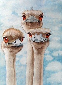 Ruth Tatter: Three Ostriches WATERCOLOR