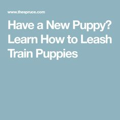 Have a New Puppy? Learn How to Leash Train Puppies