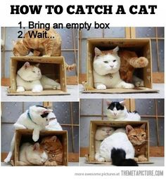Box size not an issue. This is so true...when I can't find my cats, I put out a box and here they come out of nowhere.