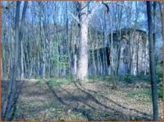 """Ghosts and spirits might be active on this ground considering the mischief and bad luck that ails/ailed the owners/occupants. In fact, there is something wrong about it. The ground is very historic. The entire territory is called – as already mentioned above – """"Fühlinger Moor"""".  During the years 1884 until 1888 the ground was built on with a stud, stables and as well the manor """"House Fühlingen"""""""
