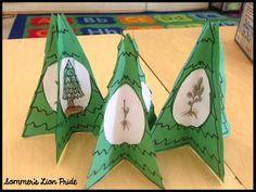 Christmas tree life cycle craft