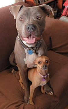 Grayson (an abandoned dog rescue out of Los Angeles) and his best friend Cassie (an unclaimed stray rescued out of Castaic shelter). ___**Visit our website now!