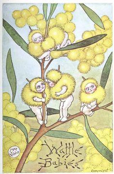 Wattle Babies by May Gibbs. Illustrations, Illustration Art, Bebe Nature, Australian Flowers, Baby Tattoos, Flower Fairies, Art For Art Sake, Woodland Creatures, Australian Artists