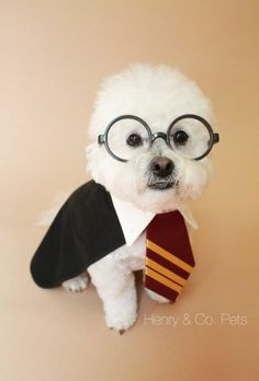 Harry Potter Pet Names Products 19 Super Ideas Harry Potter Pet Names, Harry Potter Dog Costume, Cute Dog Costumes, Animal Costumes, Costume Ideas, Funny Dogs, Cute Dogs, Dog Coats, Diy Stuffed Animals