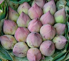 Lotus Buds I photographed at the flower market in Bangkok Thailand. voluptuous-color