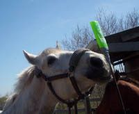 An Introduction to Clicker Training Your Horse