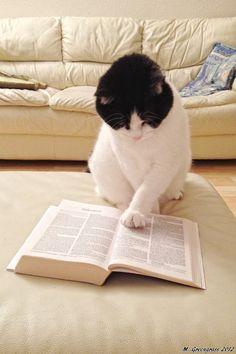 Leyendo atentamente