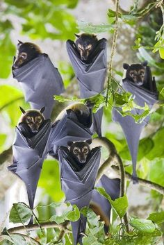 A bouquet of bats ☺
