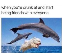 Let's get the night started!  - - - - #partytime #party #yycdogs #yyc #barkyyc #culturedcanines #pawsdogdaycare #dogs #dogsofinsta  #memes #funny #crunk #saturdaynight  #cute #hilarious #dolphins