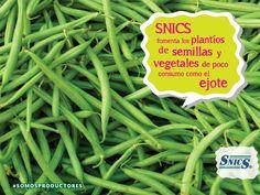 El SNICS fomenta los plantíos de semillas y vegetales de poco consumo como el ejote. SAGARPA SAGARPAMX #SOMOSPRODUCTORES