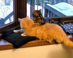 Aww! So many cats in windows! http://moderncat.com/articles/cats-windows/69856