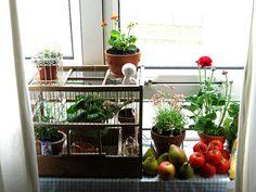 Little window sill garden
