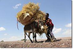 Chalback Reg-Op Lesotho