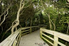 If you like nature walks.this is the place to be. Atlantic Beach, Walking In Nature, Walks, North Carolina, Sweet Home, Spaces, Outdoor Decor, Summer, Travel