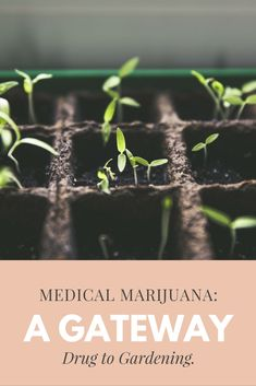 Medical Marijuana: A Gateway Drug to Gardening. #MedicalMarijuana