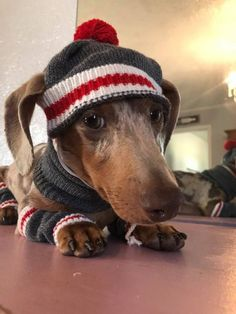 How cute are they!!!! #dachshund