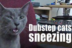 Dubstep Cats Sneezing