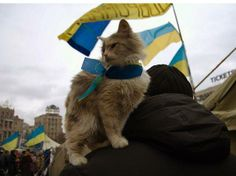Cat on Maidan
