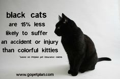 Black cats are lucky after all! Based on Petplan's insurance claims, black cats are 15% less likely to suffer an accident or injury compared to their colorful kitty counterparts. By contrast, orange cats are twice as likely as their inky cousins to be involved in a mishap.