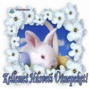 Teddy Bear, Easter, Animals, Magic, Creative, Animales, Animaux, Animal, Teddybear