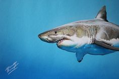 Marcello Barenghi: A cute shark on blue paper - drawing