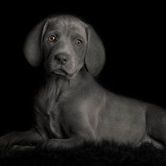 by Connie Fore - Animals - Dogs Portraits