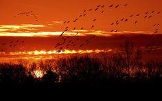 Duck Hunter's Dawn