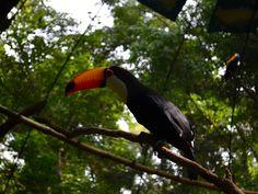 Bright Bird at Güira Oga Rehabilitation Center, Iguazu Falls, Argentina