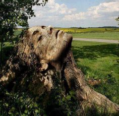 Head/face carved out of a tree trunk.  Beautiful.