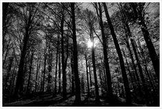 Alberi by Mauro Granato on 500px