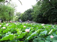 Felix Resort, Oradea, Romania Romania, Childhood Memories, Cities, Spaces, Country, Sweet, Plants, Beautiful, Candy