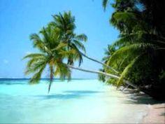 Tourist Attraction is Playa del Carmen Strand Wallpaper, Beach Wallpaper, Summer Wallpaper, Tree Wallpaper, Lion Wallpaper, Bora Bora, Tahiti, Animated Desktop Backgrounds, Desktop Wallpapers